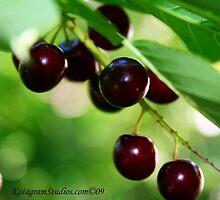Elderberries by Katagram