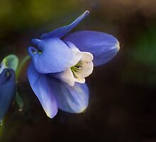 Columbine by KathleenRinker