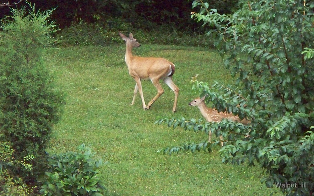 Mom and 1 of the twins by WalnutHill