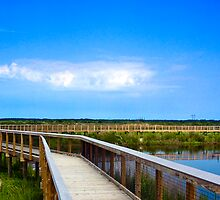 Alachua Sink Boardwalk by Rick  Bender