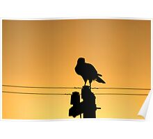Goshawk on a Pole Poster