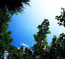 Sky1 by JiminyWood
