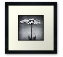B&W daisy Framed Print