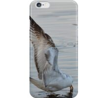 Larus Delawarensis - Ring-Billed Gull Eating | East Moriches, New York iPhone Case/Skin