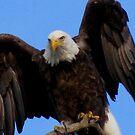 Spread Your Wings by Jan Landers