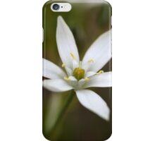 Star-of-Bethlehem (Ornithogalum umbellatum) iPhone Case/Skin