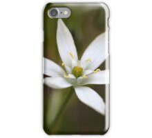 Star-of-Bethlehem (Ornithogalum umbellatum) iPhone Case/Skin
