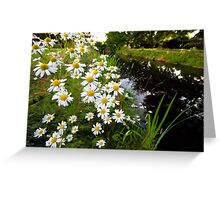 Camomiles in the park. Greeting Card