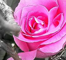 That Special Pink Rose Among Black and White Thorns by MyopesEyes