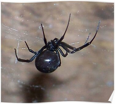 black widow spider by gabbielizzie