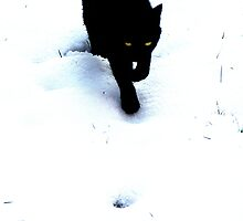 Cat in Snow ~ Black and White by Innpictime