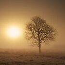 Misty Tree by James Coard