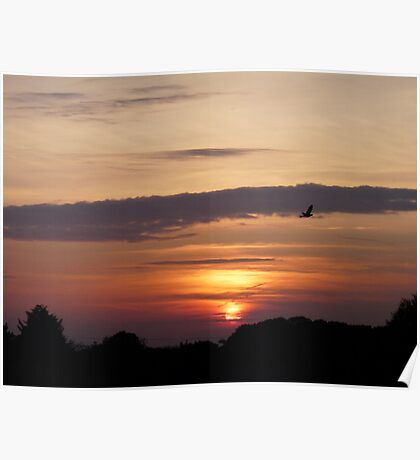 Flying Home To Roost Poster