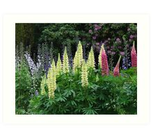 Lupins In An English Country Garden Art Print