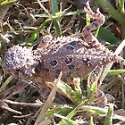 baby horned toad lizard by gabbielizzie