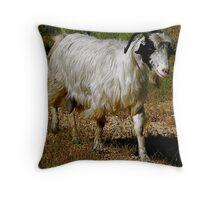 Mohair Goat, Karaburun, Turkey Throw Pillow