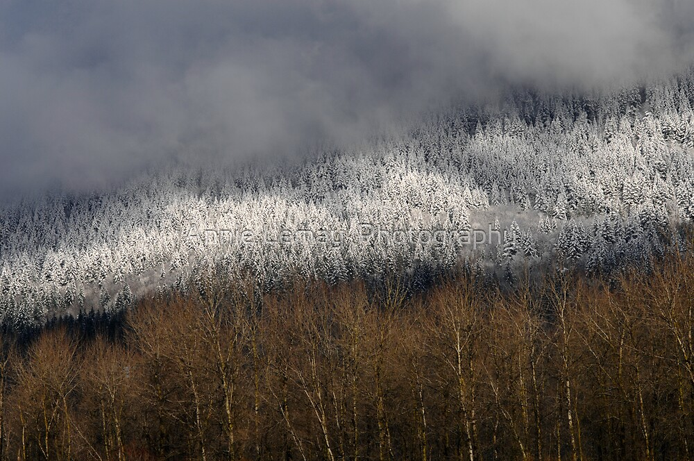 Snow in the Hills by Annie Lemay  Photography