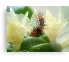 Little Chewi - Orange and black caterpillar Metal Print