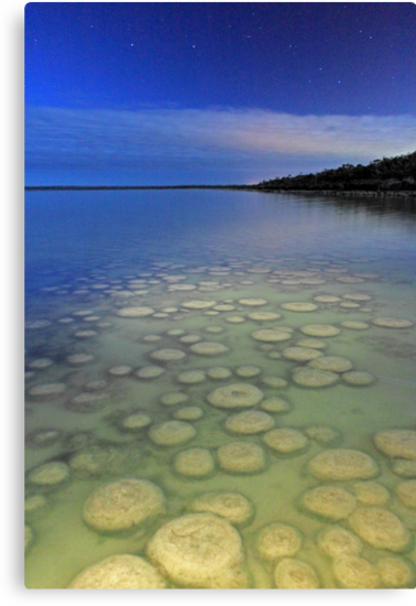 Lake Clifton Thrombolites Under Moonlight  by EOS20