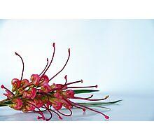 Australian flora Photographic Print