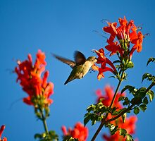 Hummer by HanieBCreations