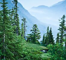 Between Mt. Baker & Mt. Shuksan by Appel