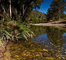 Dream Location - Tillegra, NSW by Malcolm Katon