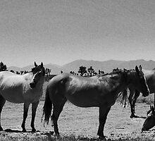 DESERT HORSES by Paul Quixote Alleyne