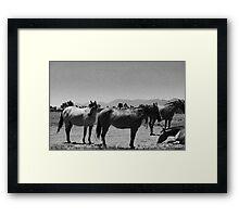 DESERT HORSES Framed Print