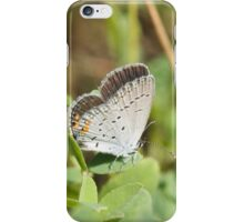 Eastern Tailed Blue iPhone Case/Skin