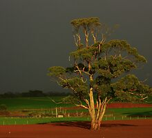Farm land at Boat Harbour, nor west Tasmania , Australia by phillip wise