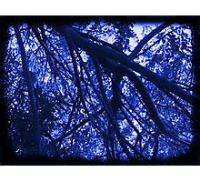 Branches and Foliage Frame the Sky – In Black and White/Electric Blue Photographic Print