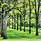Tree Alley at St. James by Brian Gaynor