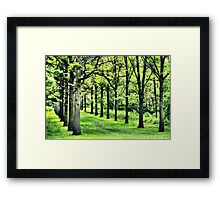 Tree Alley at St. James Framed Print