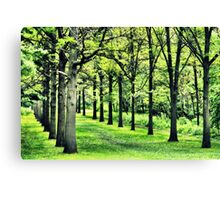 Tree Alley at St. James Canvas Print