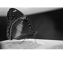 Butterfly - simplicty, shape, form Photographic Print