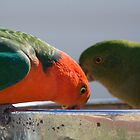 Australian King Parrots #1 by Deborah McGrath