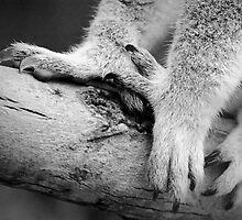 clawww.... blimey by Mark Elshout