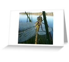 dew covered dragonfly Greeting Card
