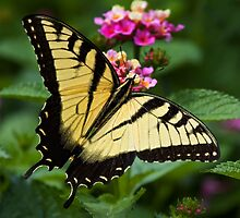 Lantana Lover by Margaret Barry
