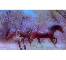 """For Dawn - Special request on """"My Horse Fantasy"""" Photographic Print"""