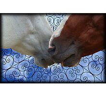 Snuggle Wes Photographic Print