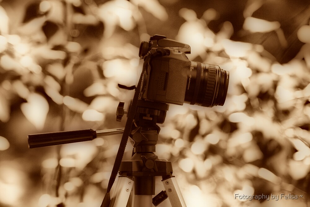Camera Love by Fotography by Felisa ~