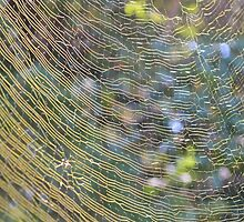 Golden Web by ©Dawne M. Dunton