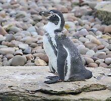 ppp-penguin by stellelove