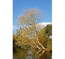 Willow in the Water Photographic Print