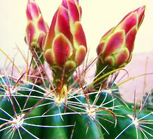 Cactus Promise by Susan Bergstrom