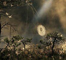 8.8.2009: Morning Magic I by Petri Volanen