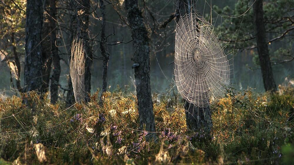 8.8.2009: Morning Magic II by Petri Volanen