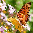 Gulf Fritillary Butterfly 3 by ©Dawne M. Dunton